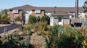 Community garden in fall