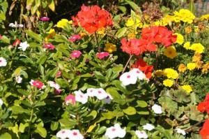Flowers in community garden